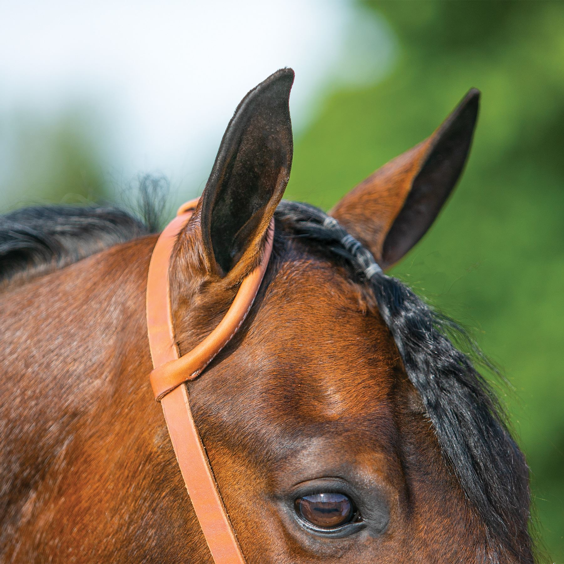 Billy Royal® Rolled One Ear Headstall