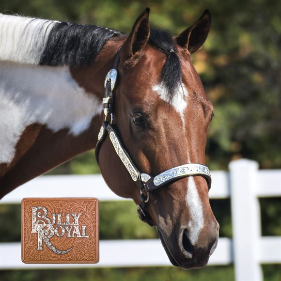 Billy Royal® Riverside Rebel Show Halter