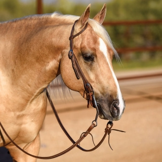 Billy Royal® Latigo Lined Oiled Hermann Oak Leather Rolled One Ear Headstall